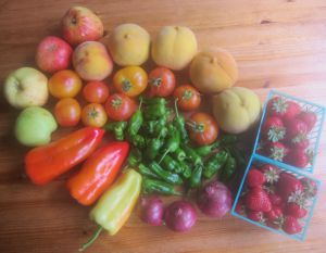 My webster's August farmers market haul (photo by Sienna M Potts)